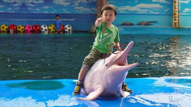 Поплавать с дельфинами в Паттайе