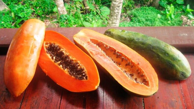 Зеленые и спелые плоды папайи