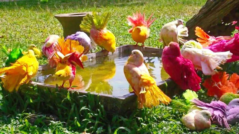 Птицы в Парадайз Парке на Самуи