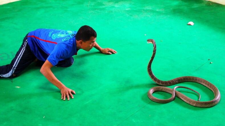 Шоу со змеями в Тайланде