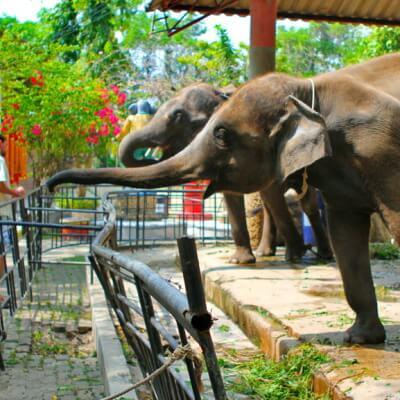 Зоопарк на Пхукете