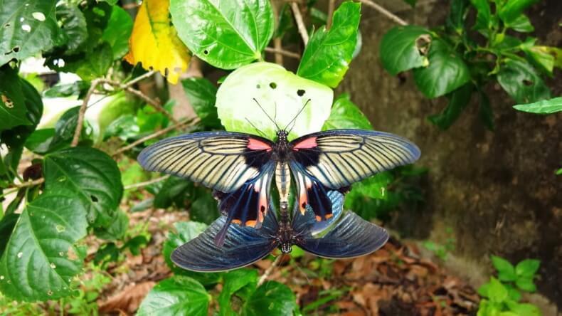 Сад бабочек на Самуи