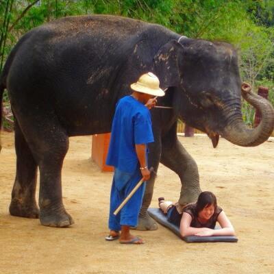 Массаж слоном в Тайланде