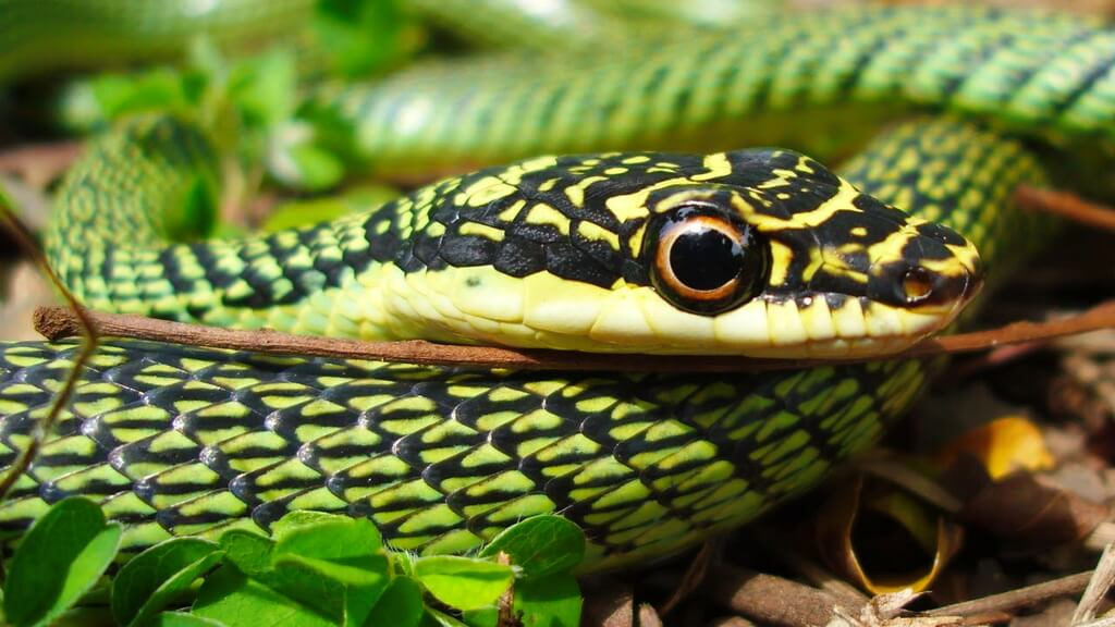 фото картинки змея