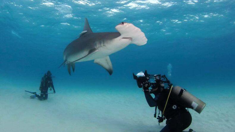 Есть ли акулы в сиамском заливе