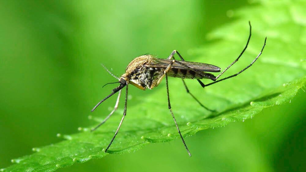 Картинки по запросу комары