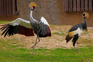 Птицы в зоопарке Кхао Кхео в Паттайе