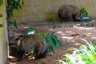 Животные в зоопарке Кхао Кхео в Паттайе