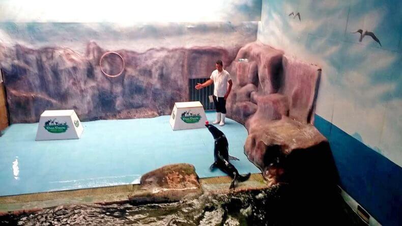Показательное шоу в зоопарке Кхао Кхео в Паттайе