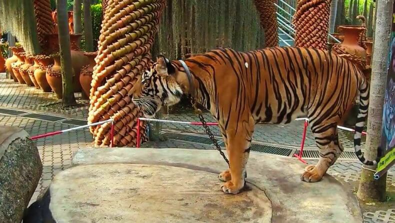 Зоопарк в парке Нонг Нуч