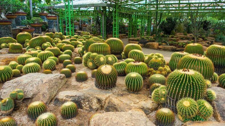Сад кактусов в парке Нонг Нуч