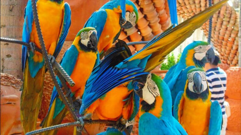 Сад птиц в парке Нонг Нуч