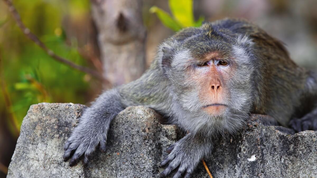 Видео секс с девушкой обезьяны таиланде