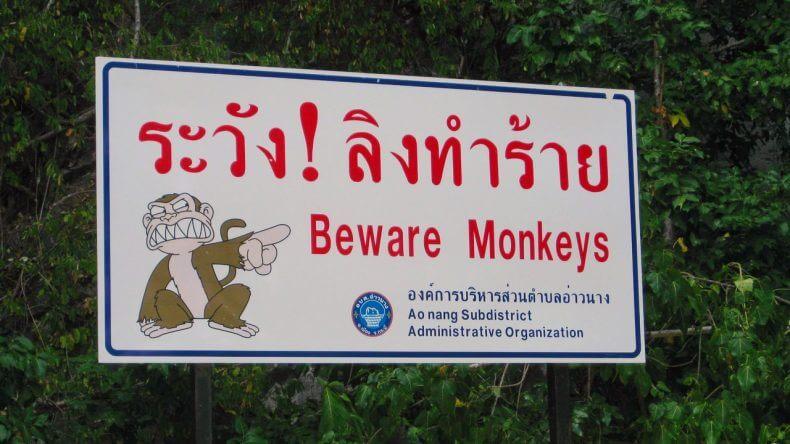 """Предупреждающая табличка """"Берегитесь обезьян"""" в Тайланде"""