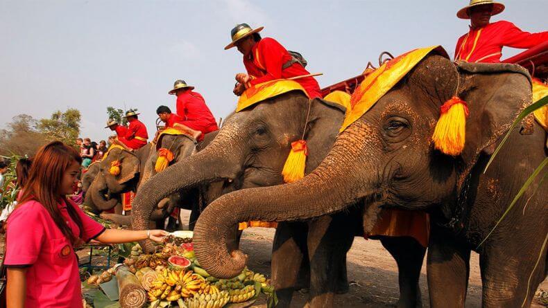 День слона в Тайланде