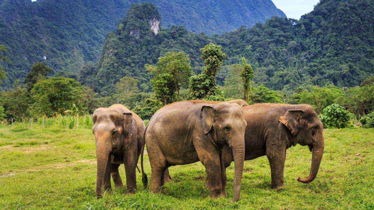 покормите слоников