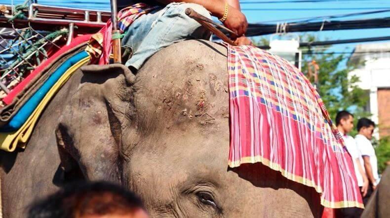 Как дрессируют слонов в Тайланде