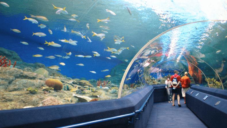 Экскурсия в Океанариум Паттайи