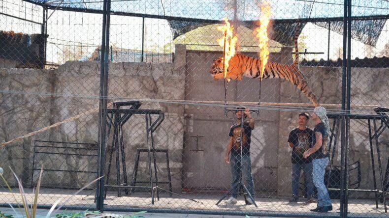 Тигровый зоопарк и аквариум на Самуи