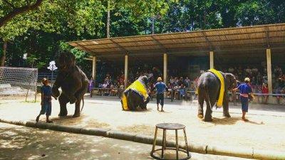 Шоу слонов в сафари-парке Намуанг на Самуи