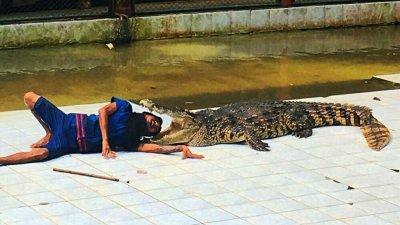 Шоу с крокодилами в сафари-парке Намуанг на Самуи