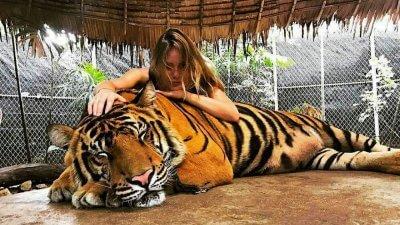 Фото с тигром в сафари-парке Намуанг на Самуи