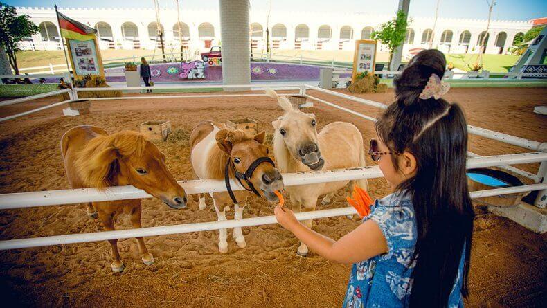 Ферма Пипо Пони в Паттайе