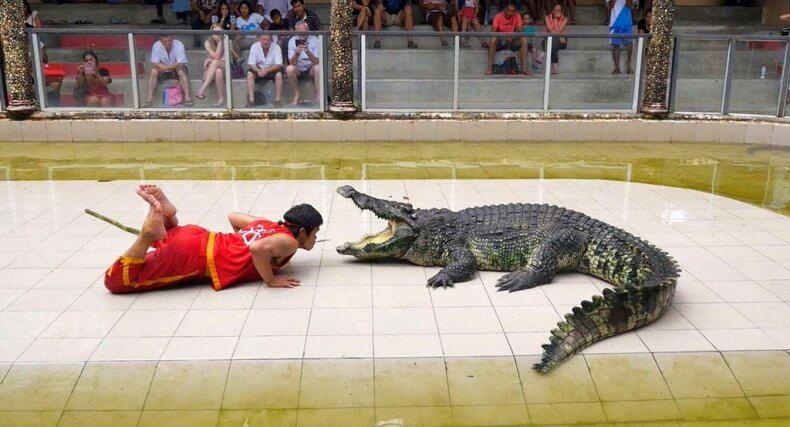 Шоу с крокодилами в Тайланде